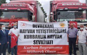 Türkiye'de Marka Haline Gelen Devrekani Kurbanlıklarının İstanbul Sevkiyatı Başladı.